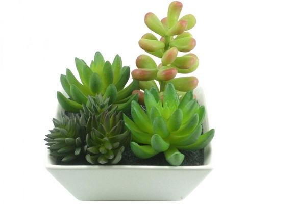 mini jardins em vidro : mini jardins em vidro:Jardins em miniatura – Portal Angels
