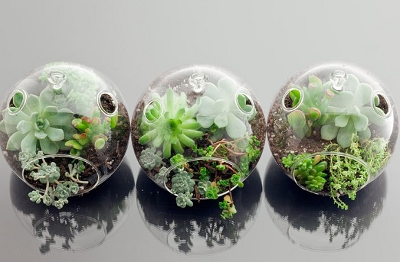 plantas-mini-jardim3