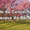 Festa da Cerejeira do Parque do Carmo