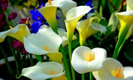 Plantas e flores que ajudam a proteger e atrair boa sorte