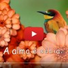 Lindo vídeo de boa noite com a mensagem: A alma é sábia, para watsapp