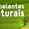Repelente natural para diversos tipos de insetos