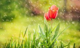O perfume do otimismo e da alegria
