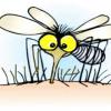 Inseticida natural para acabar com os mosquitos