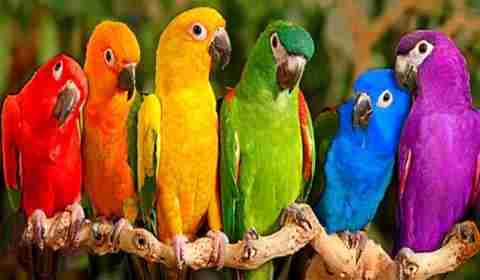 Sonhar com Papagaio