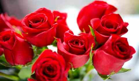 sonhar com rosas