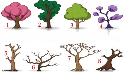 Teste de personalidade das 8 árvores